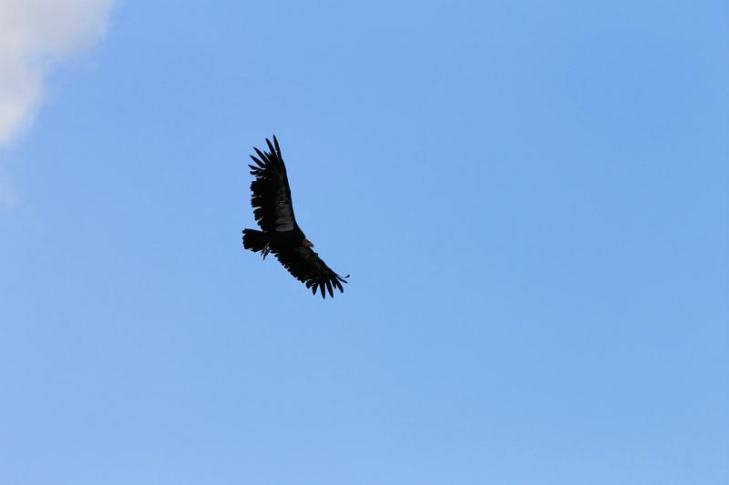 view-condor